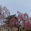 弘前城-続3