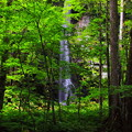 奥入瀬渓流3 白糸の滝