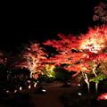 松島円通院ライトアップ2