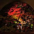 松島円通院ライトアップ3
