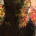 写真: 古樹蒼苔