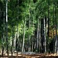 竹林の明るさ