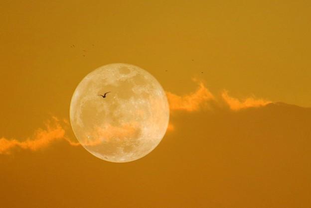 Photos: 月に鴎