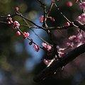 梅が枝(2)