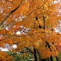 写真: 紅葉 (2)