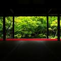 写真: 夏の圓光寺(人なし)