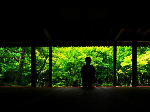 Photos: 夏の圓光寺
