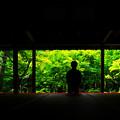 写真: 夏の圓光寺