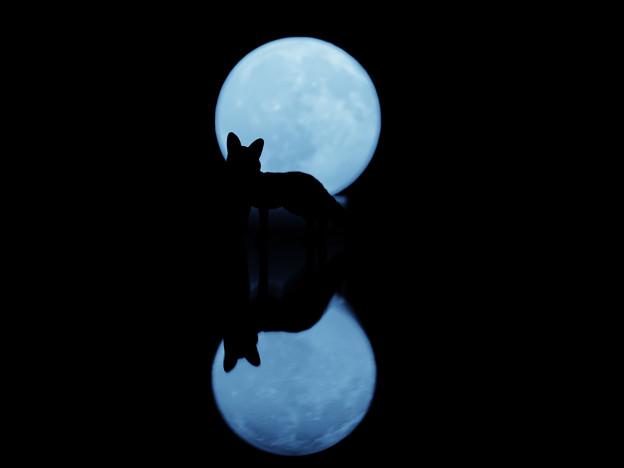 月明りと狐