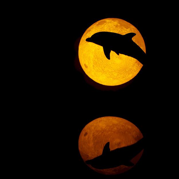 月夜を翔けるイルカ