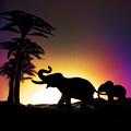 写真: アフリカ