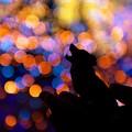 写真: カレッタの咆哮2