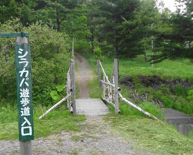 シラカバ遊歩道入口