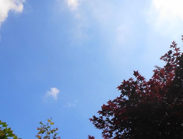 午後からは東の空に青空が広がる