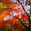写真: 紅葉を見上げて