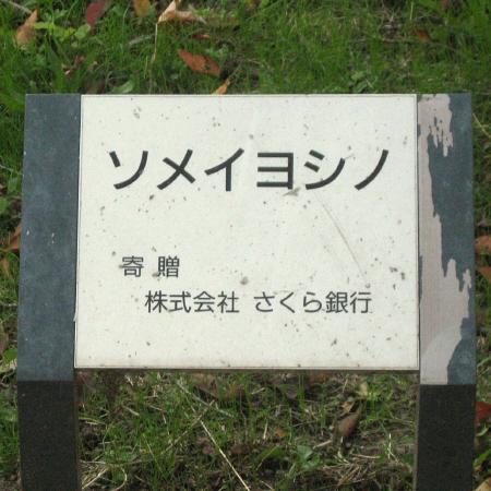 太陽神戸三井