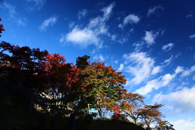 秋空を眺める