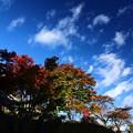 Photos: 秋空を眺める