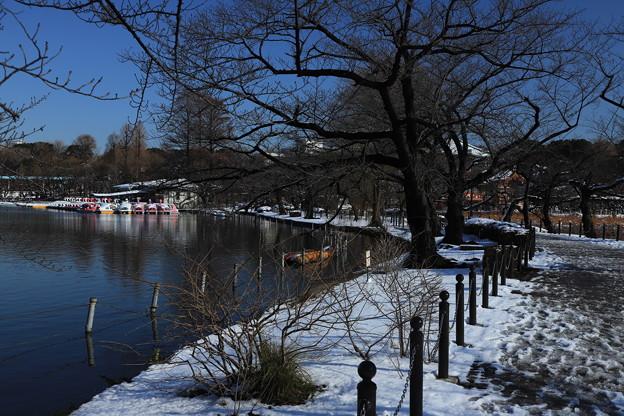 雪の不忍池