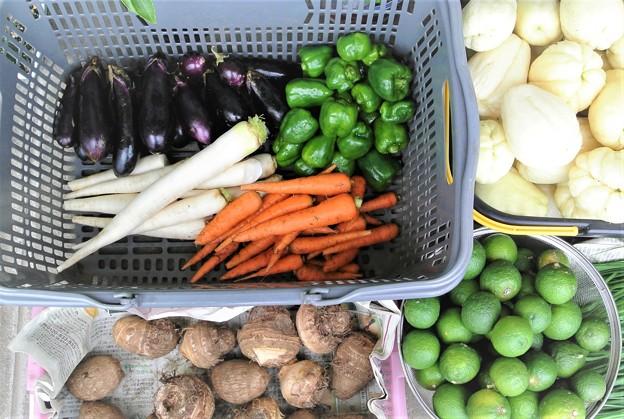 Photos: 菜園の収穫.