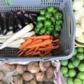 菜園の収穫.