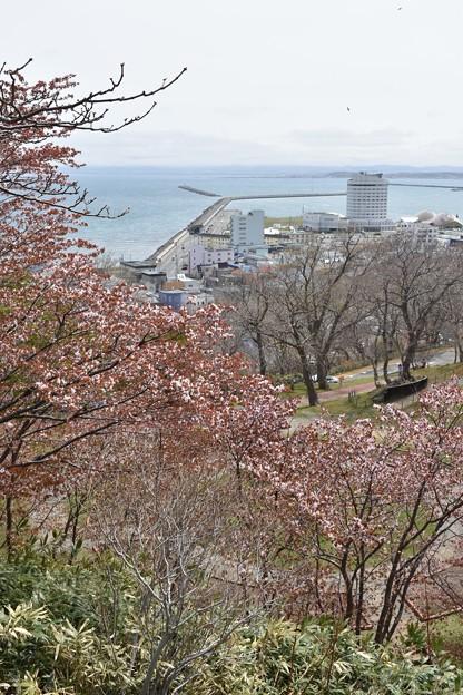 空と海と桜と