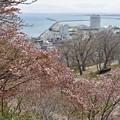 写真: 空と海と桜と