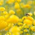 Photos: 春とともに