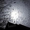 写真: 鱗雲