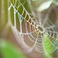 写真: 蜘蛛の巣