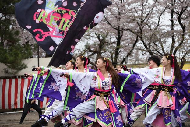 熊谷桜よさこい2017 dance company REIKA組2