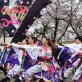 写真: 熊谷桜よさこい2017 dance company REIKA組2