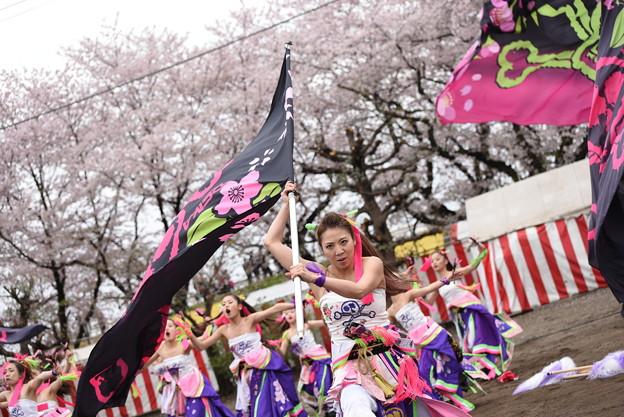 熊谷桜よさこい2017 dance company REIKA組4
