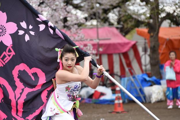 写真: 熊谷桜よさこい2017 dance company REIKA組5