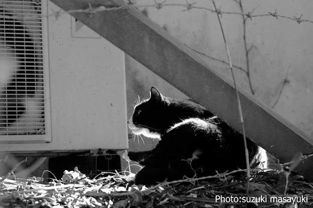 穏やかな表情の黒白猫♪
