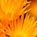 RSKバラ園の花々