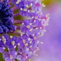 写真: 紫尽くし