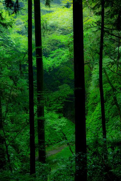 森の奥深くへ