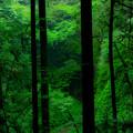 写真: 森の奥深くへ