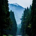 写真: 森へと・・・・
