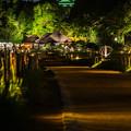 写真: 夏の幻想庭園 夏の烏城灯源郷