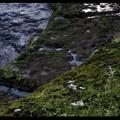 Photos: 藻 苔 水場