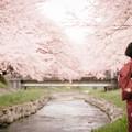 写真: sakura blossom