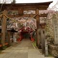 知られざる桜の名所