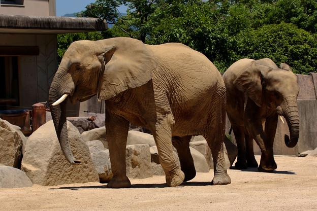 久しぶりに安佐動物園