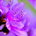 写真: 次の紫は