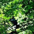 写真: 新緑~