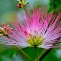 写真: やっと咲いた