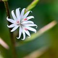 写真: 三つのお花が