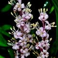 写真: 蕾は紫、花は白